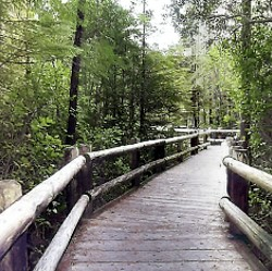 Darlingtonia State Natural Site