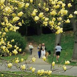 Arnold Arboretum of Harvard University