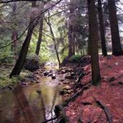 Mont Alto State Park