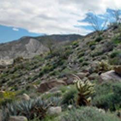 Agua Caliente County Park – Anza Borrego Desert