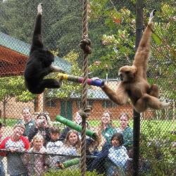 Sequoia Park Zoo
