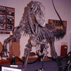 Alf Museum of Paleontology
