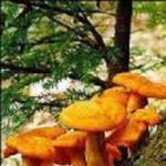 Abram S. Hewitt State Forest
