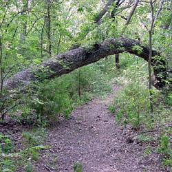 Jackson Spring Creek Forest Preserve