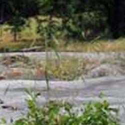 Indian Grinding Rocks State Historic Park