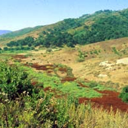 Aliso and Wood Wilderness Park