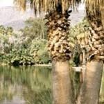 Agua Caliente Park (Roy P. Drachman)