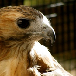 Woodcock Nature Center