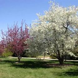 Arboretum at PERC