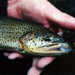 Alchesay-Williams Creek National Fish Hatchery Complex