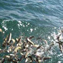 Allegheny National Fish Hatchery