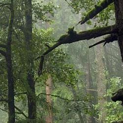 El Corte de Madera Creek