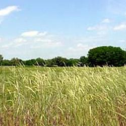 South Arkansas River Greenway
