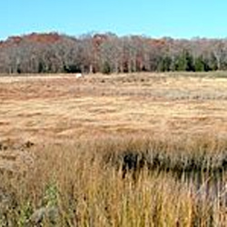 Touisset Marsh Wildlife Refuge