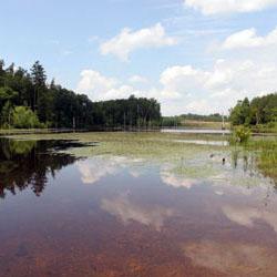 Appomattox-Buckingham State Forest