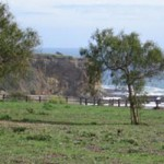 Abalone Cove Shoreline Park