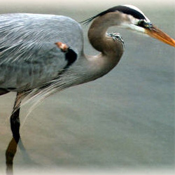 Ballona Creek Trail – Ballona Wetlands Ecological Reserve Access