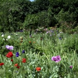 Jensen Botanical Gardens