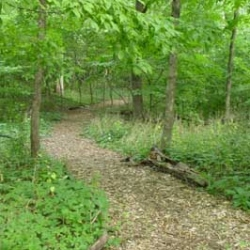 Sessions Woods Wildlife Management Area