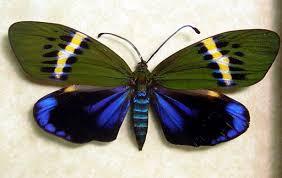moth exhibit