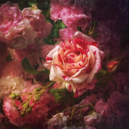 PlantPortraitdavid_perry_rose500px