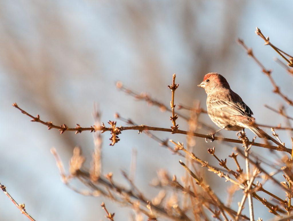 BirdingbyEar