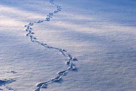 animal-tracks-in-snow_shutterstock_67674577 copy