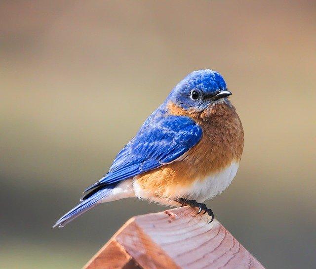 bluebird-3456115_640